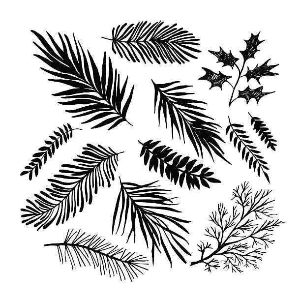 612x612 Collection Of Evergreen Branch Clipart High Quality, Free