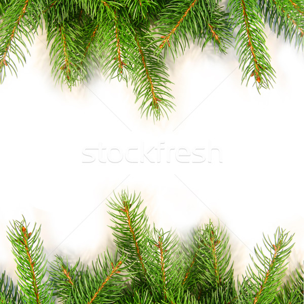 600x600 Pine Stock Photos, Stock Images And Vectors Stockfresh