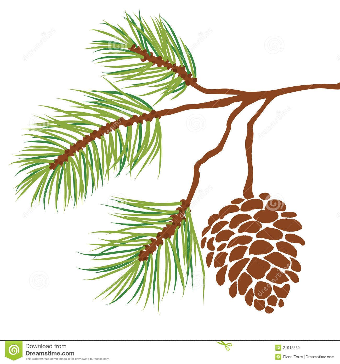1300x1390 Pine Tree Branch And Cone Vector Royalty Free Stock Images