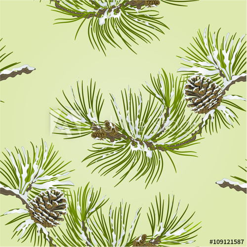 500x500 Seamless Texture Pine Branch With Snow And Pine Cone Vector