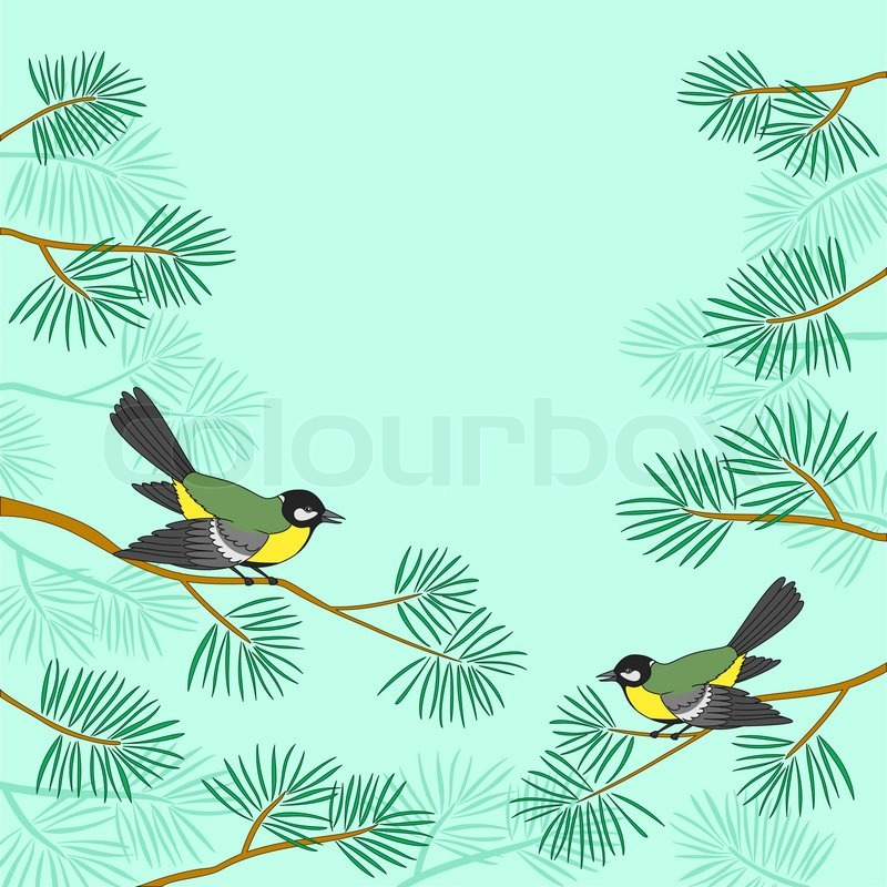 800x800 Background, Pair Birds Titmouse Sitting On Pine Branches Against