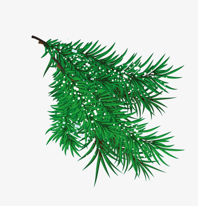 650x676 Vector Pine Branches, Pine Branches, Vector Pine, Green Png And