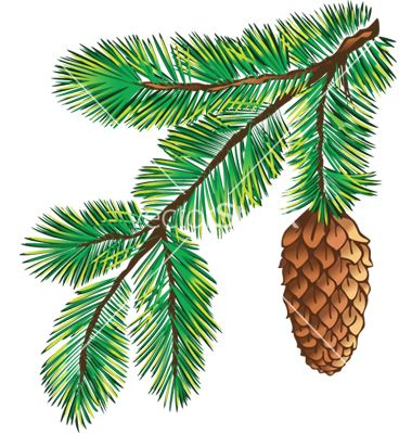 380x400 Branch Of Pine With Cone Vector Art