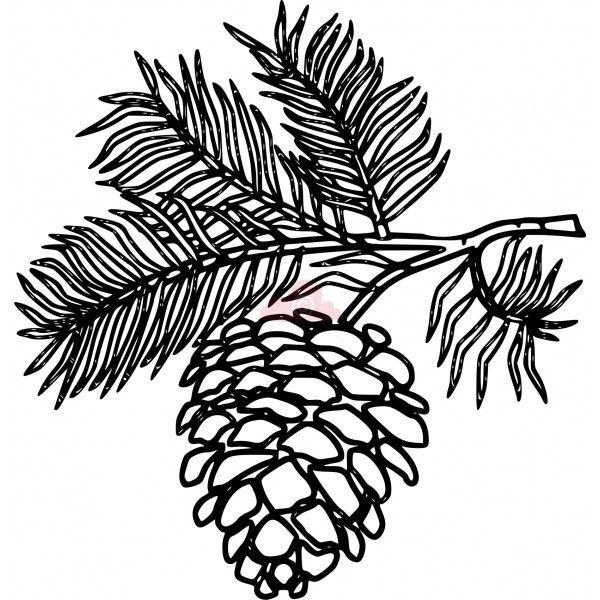 600x600 Drawn Pine Cone Pine Branch