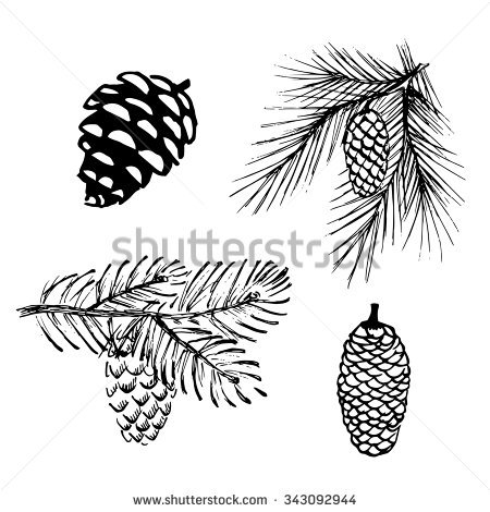 450x470 Drawn Pine Cone Pine Leaf 24