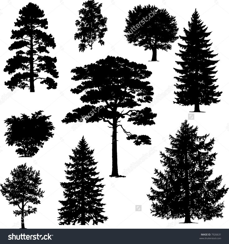 Pine Forest Vector