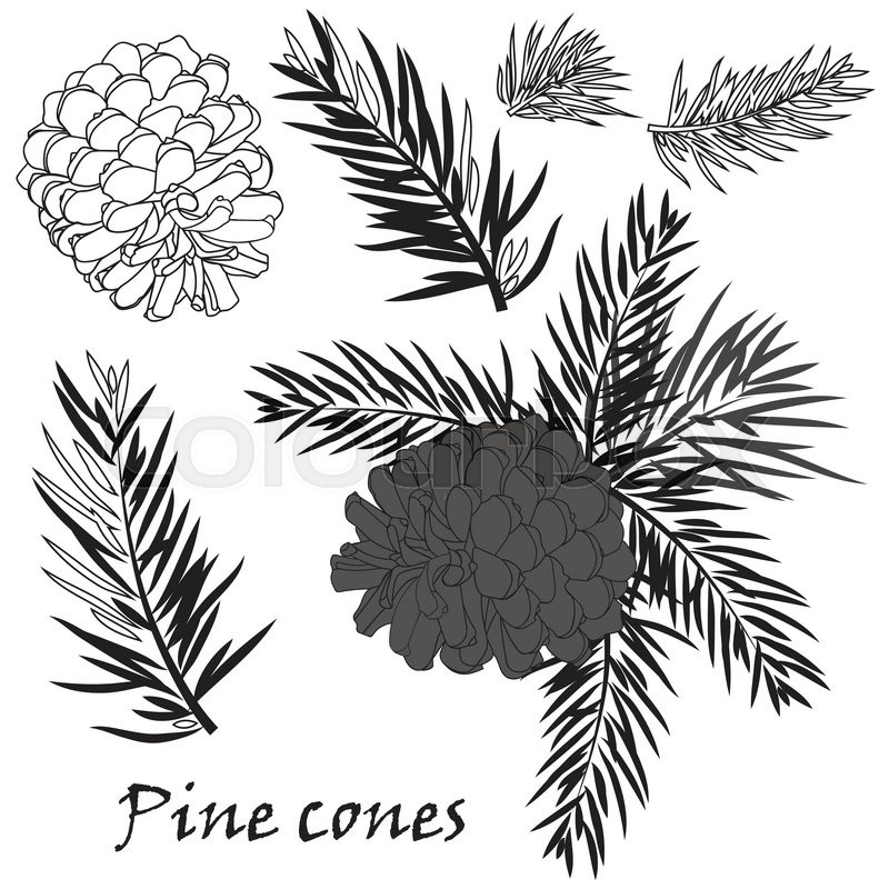 800x800 Fir Tree Branches With Pine Cone Black Silhouette On White