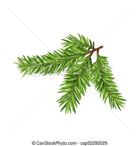 450x470 Green Lush Spruce Or Pine Branch. Fir Tree Branch Isolated On