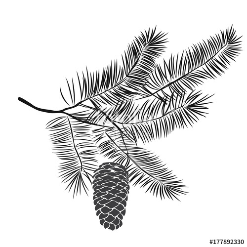 500x500 Hand Drawn Pine Tree Branch Stock Image And Royalty Free Vector