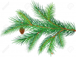 262x196 Inspirational Color Pine Clipart Pine Tree Branch Clipart 1300 972