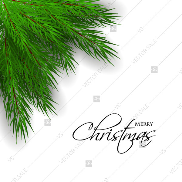 600x600 Merry Christmas Greeting Card With Green Fir Tree Branch. Vector