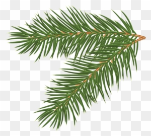 300x270 Pine Tree Branch Clip Art, Transparent Png Clipart Images Free