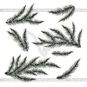 300x300 Pine Tree Branches