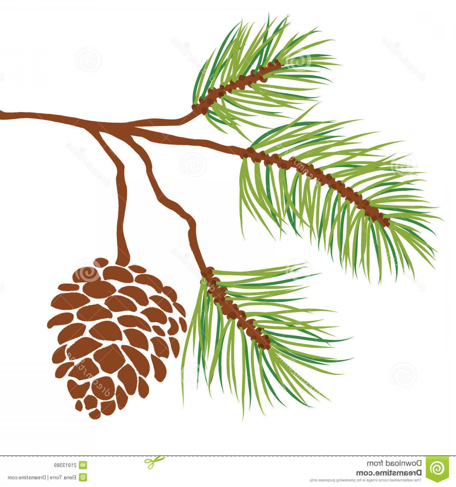 1560x1668 Royalty Free Stock Images Pine Tree Branch Cone Vector Image Arenawp