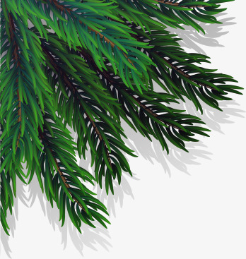 348x367 Vector Christmas Pine Tree Branch, Tree Clipart, Branch Clipart