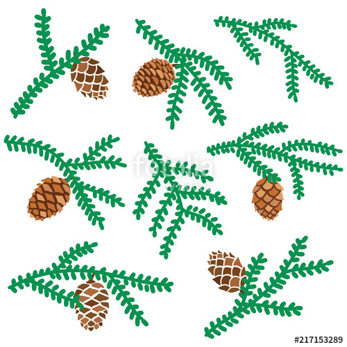 500x500 Vector Pine Tree Branches Set With Cone Isolated. Forest