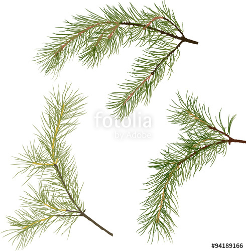 490x500 Three Pine Tree Green Branches Isolated Illustration Stock Image