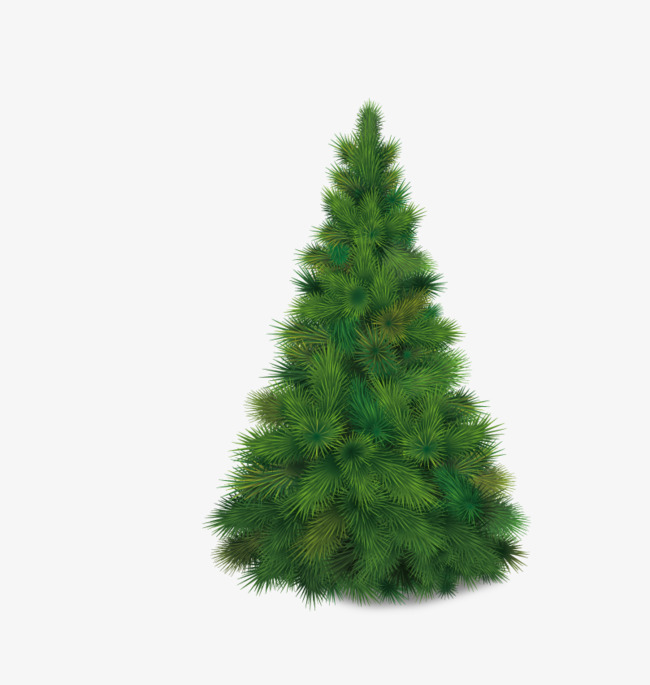 650x685 A Pine Tree Vector, Tree Vector, Tree Clipart, Free Png Fig. Png