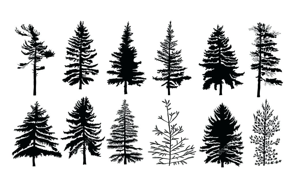 1024x645 Pine Tree Vector Pine Tree Vector Free Download