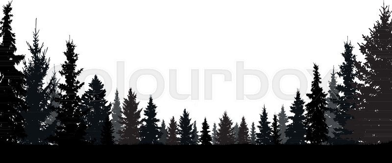 800x333 Forest, Coniferous Trees, Silhouette Vector Background. Tree, Fir