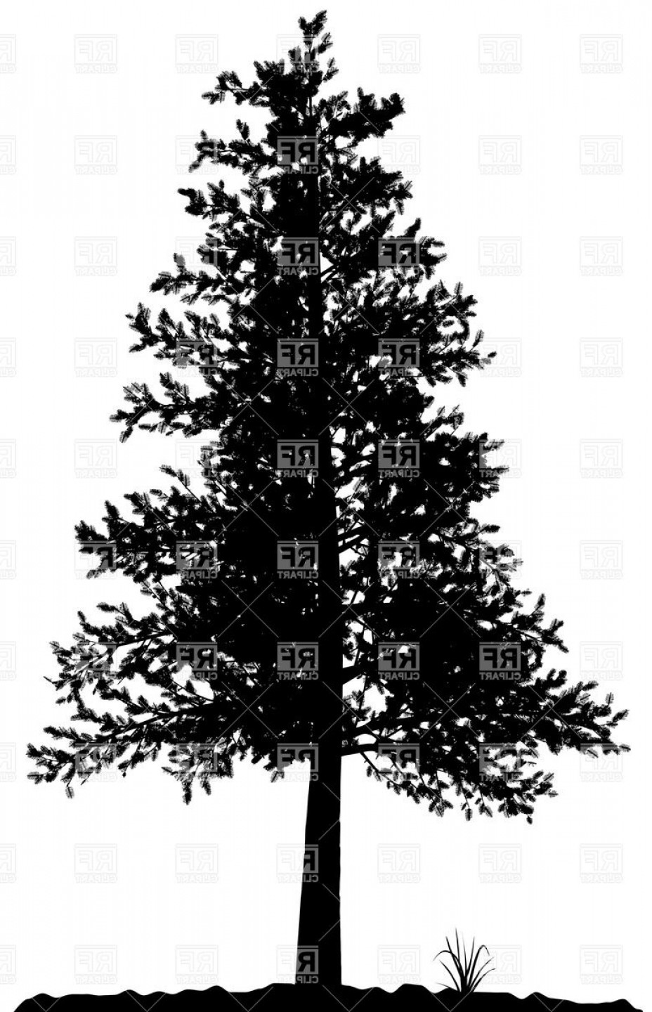 928x1440 High Detailed Pine Tree Silhouette On White Background Vector