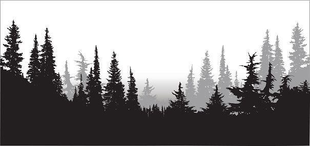 605x286 National Forest Pines Tattoos National Forest