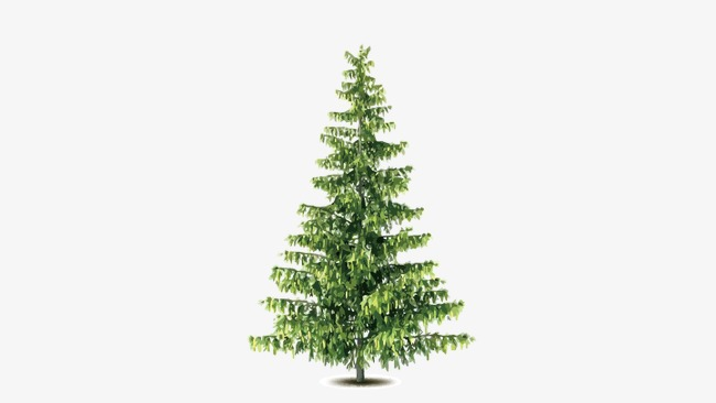 650x366 Pine, Vector Pine, Trees Png And Vector For Free Download