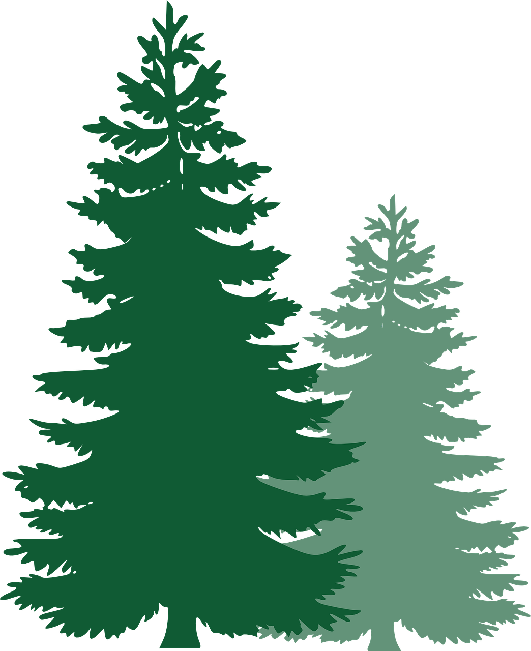 1044x1280 Pine Tree Forest Png Royalty Free Download