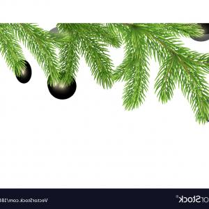 300x300 Vector Christmas Frame Pine Branches Transparent Arenawp