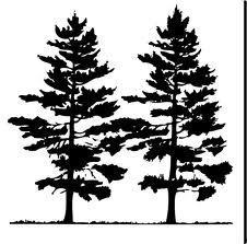 226x223 Tree Pine Vector