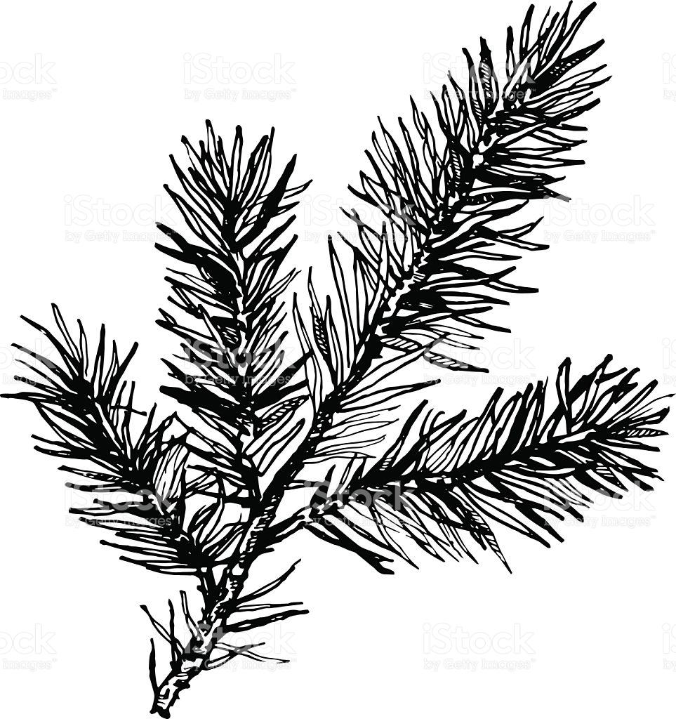 963x1024 Drawn Pine Tree Vector