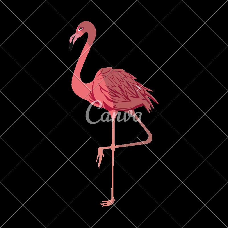 800x800 Pink Flamingo Vector