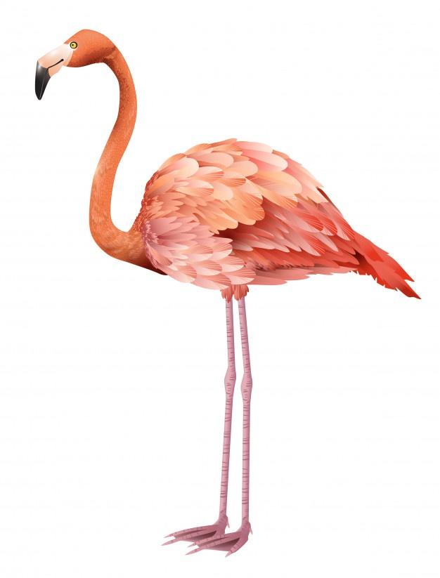 626x823 Pink Flamingo Vectors, Photos And Psd Files Free Download