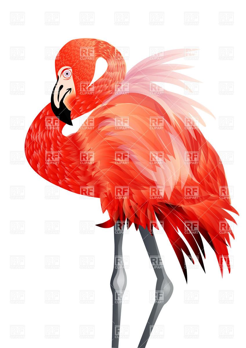 848x1200 Pink Flamingo Vector Image Vector Artwork Of Plants And Animals