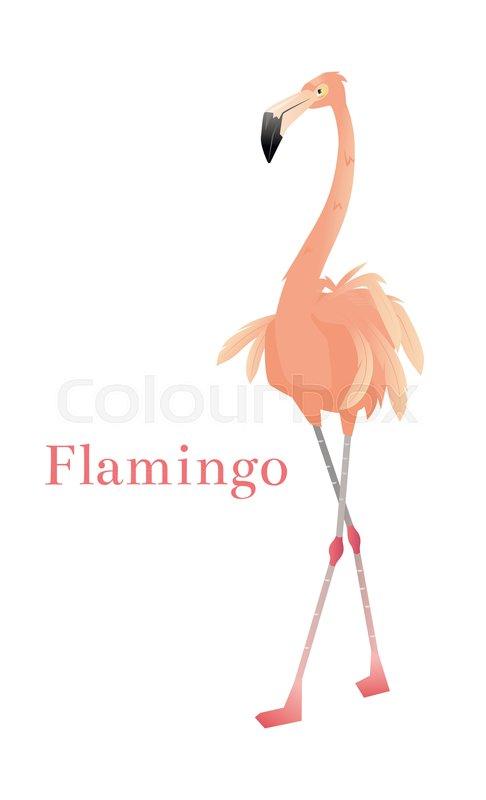 486x800 Pink Flamingo Vector Illustration Isolated On White Background