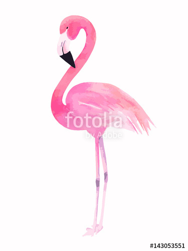 375x500 Watercolor Pink Flamingo. Vector Illustration Stock Image And