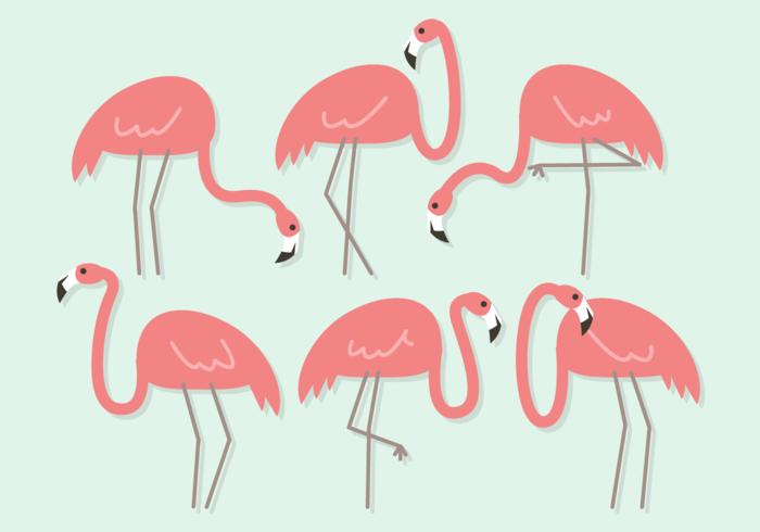 700x490 Flamingo Free Vector Art