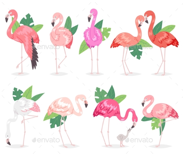 590x505 Flamingo Vector Tropical Pink Flamingos And Exotic By Pantimetrok