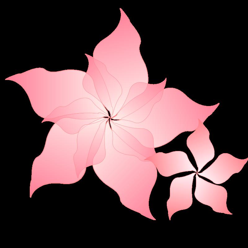 800x800 Pink Flower Free Vector 4vector