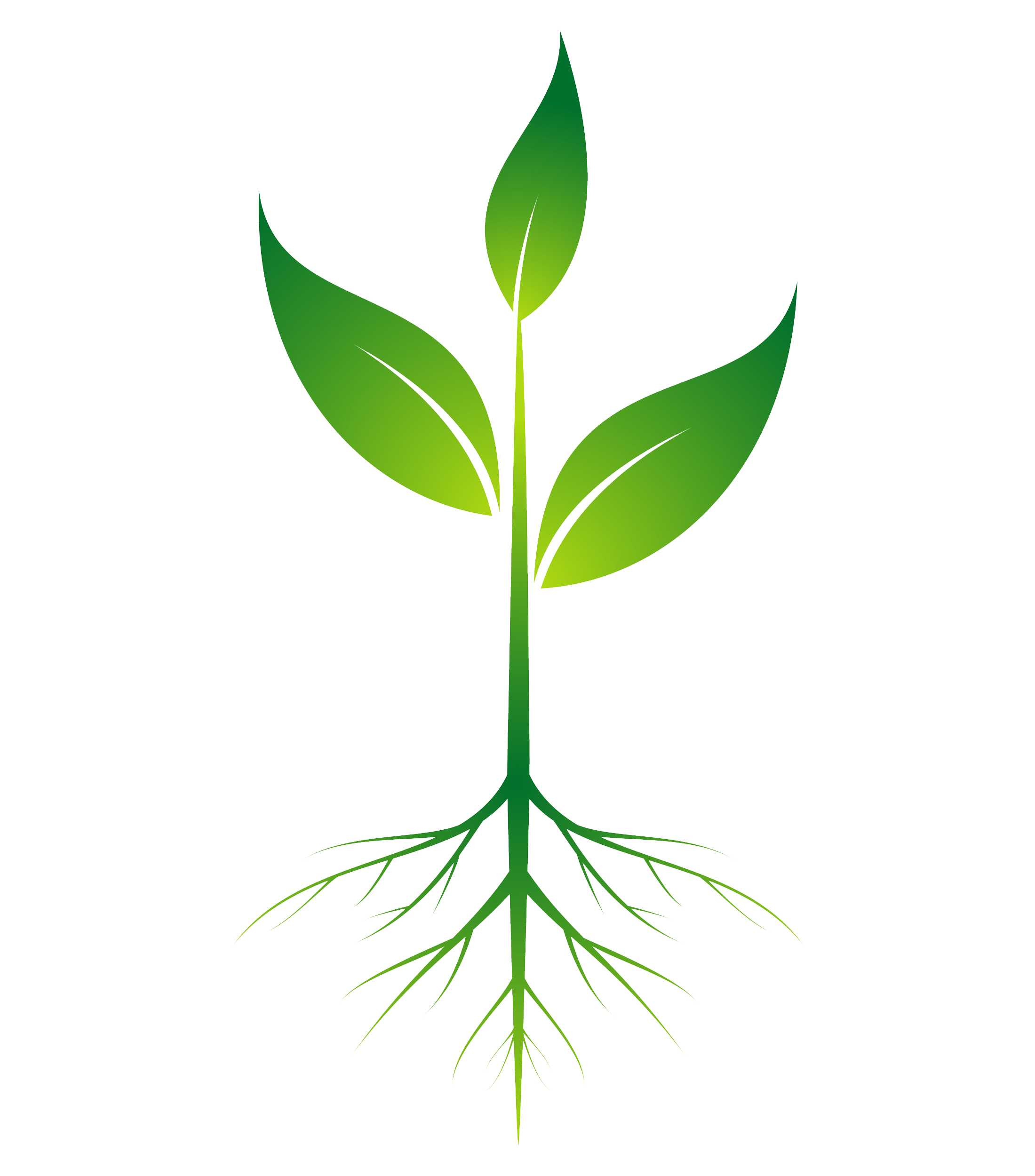 Plant Roots Vector
