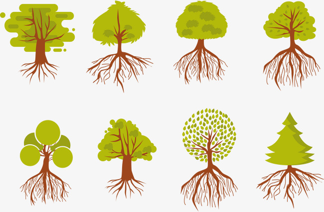 650x426 Introduction To Plant Roots, Vector Material, Biology, Plant Roots