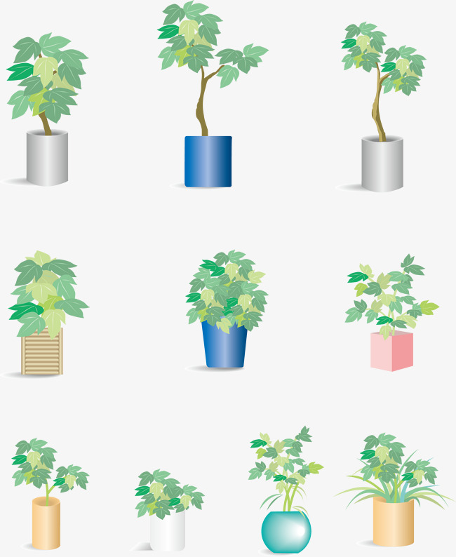 650x794 Indoor Potted Ivy Plant Vector, Plant Vector, Indoor Ivy, Potted