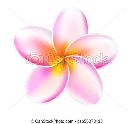 450x416 Vector 3d Plumeria Frangipani Tropical Flower. Plumeria Tropical