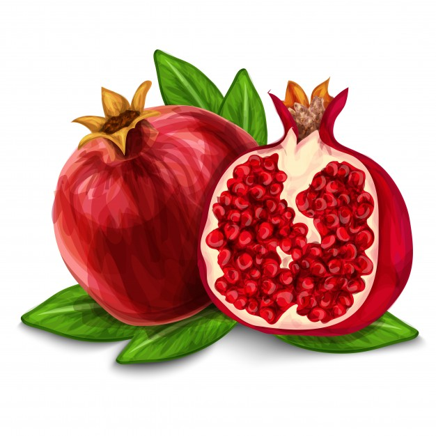 Pomegranate Vector At Getdrawings