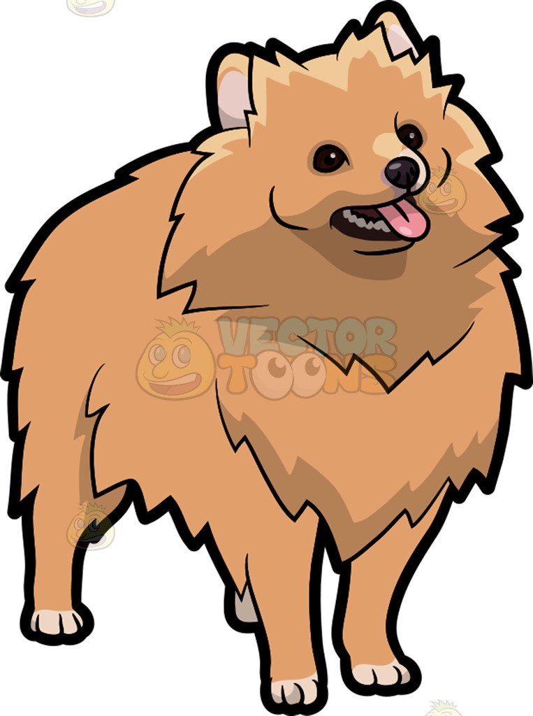 Pomeranian Vector At Getdrawingscom Free For Personal Use
