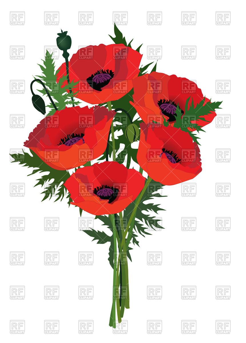861x1200 Red Flower Bouquet With Poppy Vector Image Vector Artwork Of