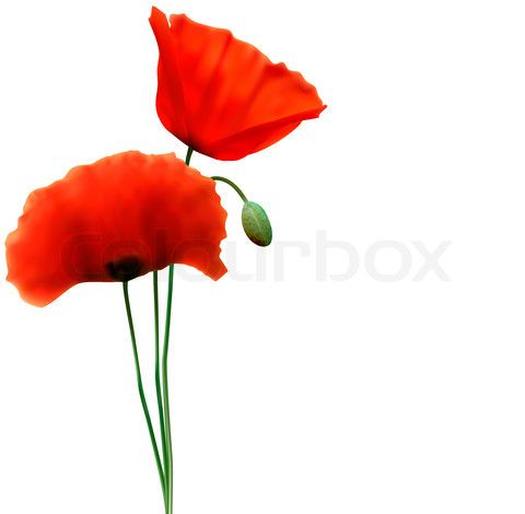 480x470 Image Of Spring Background With Red Poppy Vector Spring