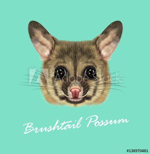 488x500 Vector Illustrated Portrait Of Common Brushtail Possum