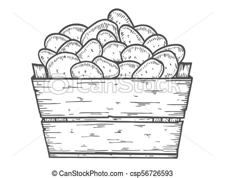 450x357 Potato Vector Illustration. Box Of Potatoes Hand Drawn. Engraved