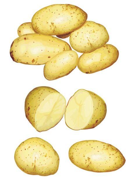 460x624 Potato Vector Material Ovocie